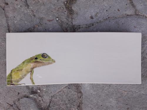 Lizard tray