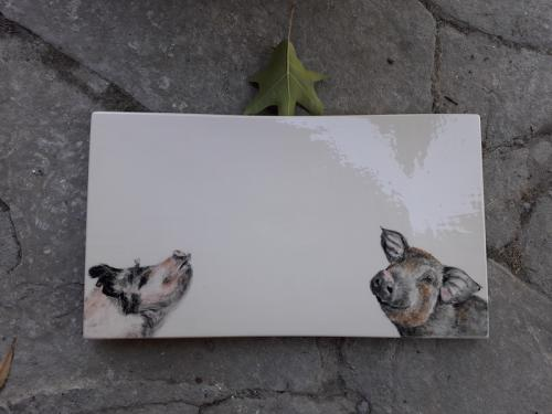Pigs tray